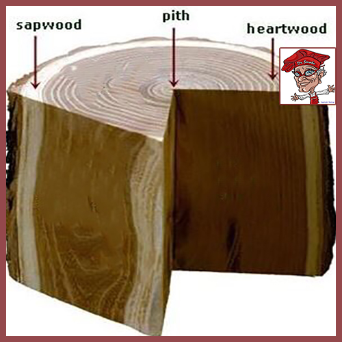 Example of the layers that form a tree showing the heartwood of the tree