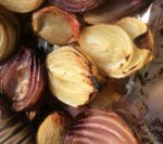 Finished wood roasted onions ready for serving