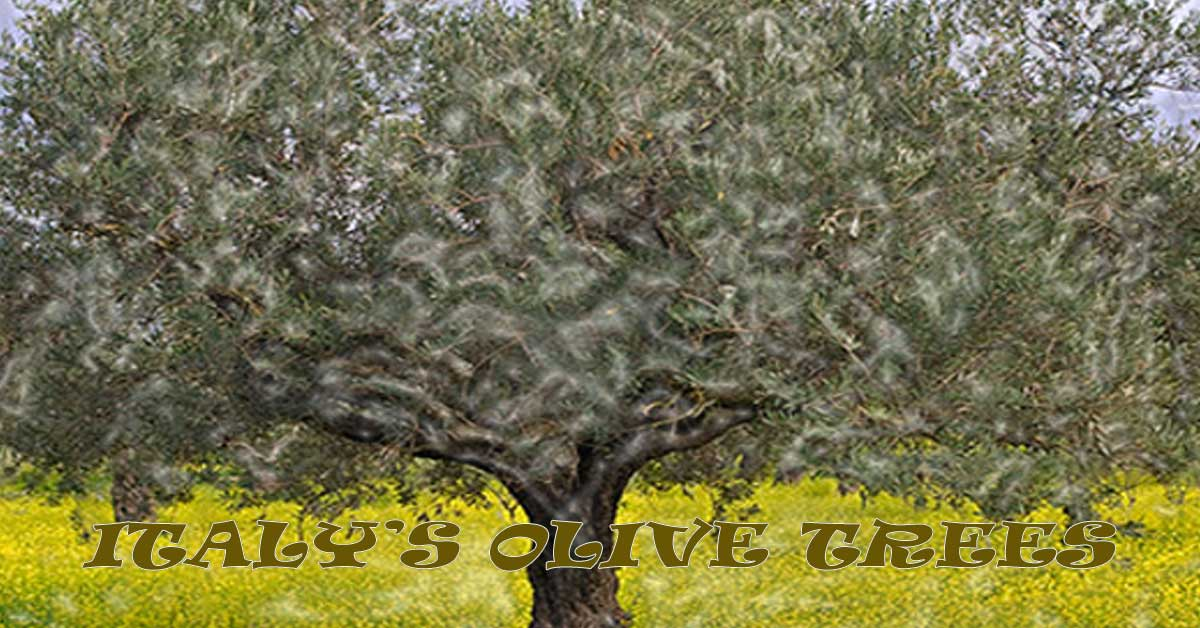 THE USA IS NOT ALONE: ITALY'S OLIVE TREES FALL TO BACTERIUM - Smoking Wood Tips