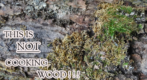 Unfortunately many people use wood for grilling and smoking which includes common lichen mold as seen in this picture- do not GRILL WITH MOLDY WOODS